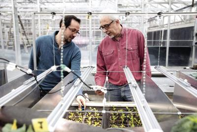 Erico Mattos (left) co-founded his startup company Candidus with Mark van Iersel, Dooley Professor of Horticulture, CAES. Candidus uses lighting sensors to improve greenhouse farming production.