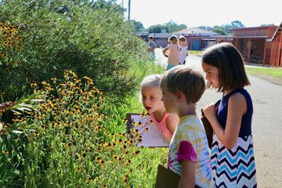 Second-grade students at Colham Ferry Elementary School in Oconee County work to stay focused on their plants during UGA Extension's inaugural Great Georgia Pollinator Census on Aug. 23.