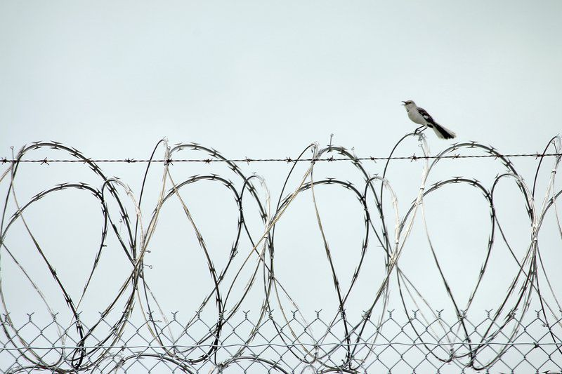 Back to Jail: Addiction, mental illness, joblessness pave path back to prison