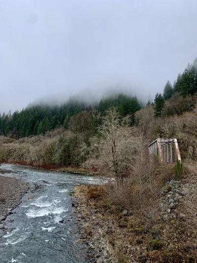 Salmonberry Trail