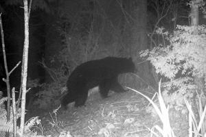 Bear safety: Sheriff's Office reports bear sightings
