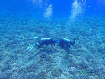 Coral reef 1.jpg