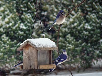 birds.TIF