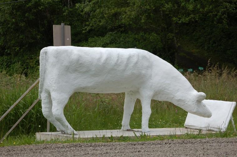 Hebo Cow