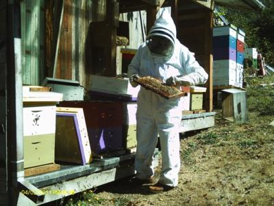 Craig Kaufman in beekeepers outfit, Bay City.