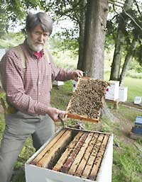 Research: Beekeepers' honey traces heavy metals