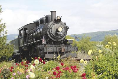 Train Dahlias Garibald Lois Bizieff