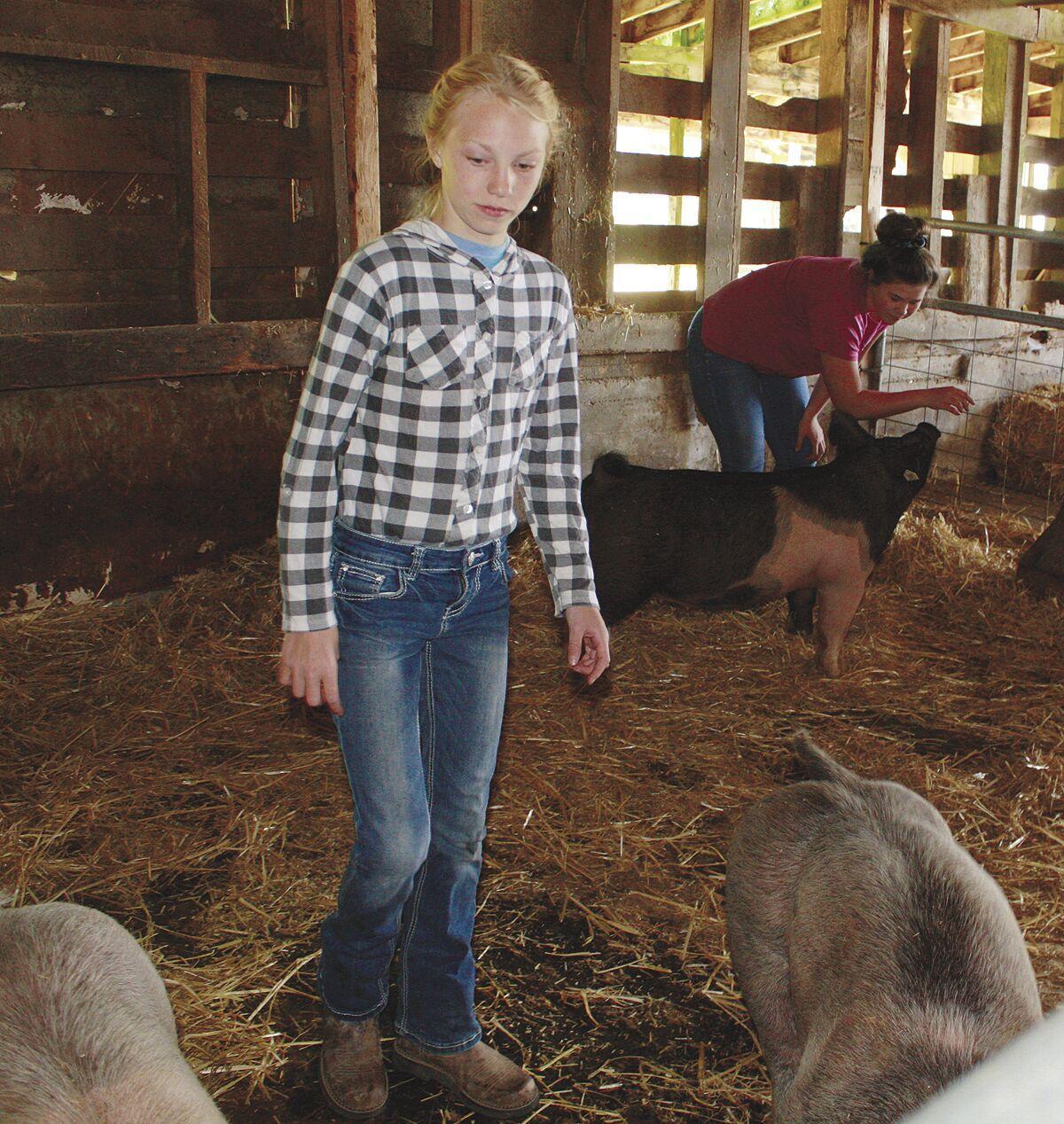 Tillamook County Junior Livestock Auction
