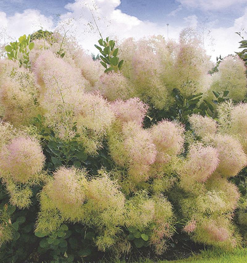 The beauty of shrubs