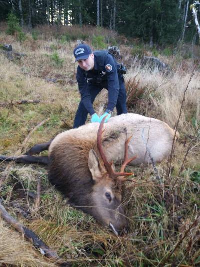 Elk.tif