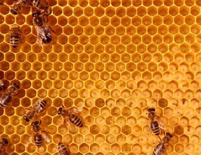 HoneyHouse pic.tif