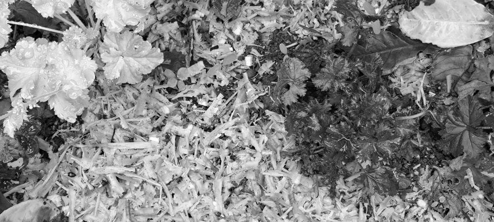 Bark chips mulch