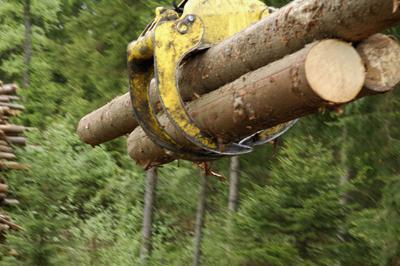 Timber.tif