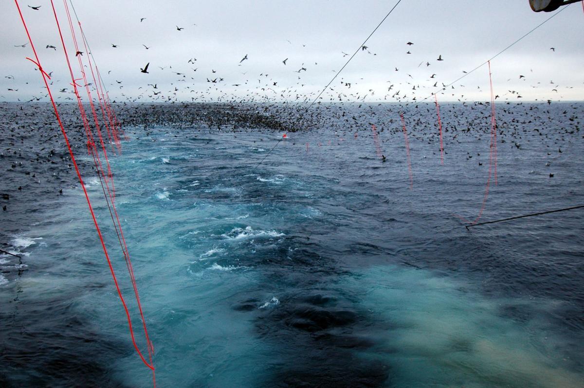 Seabrid bycatch.jpg