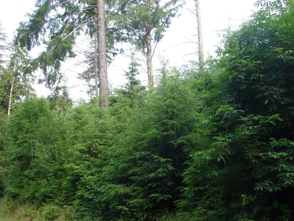 Oregon Tree Farm System