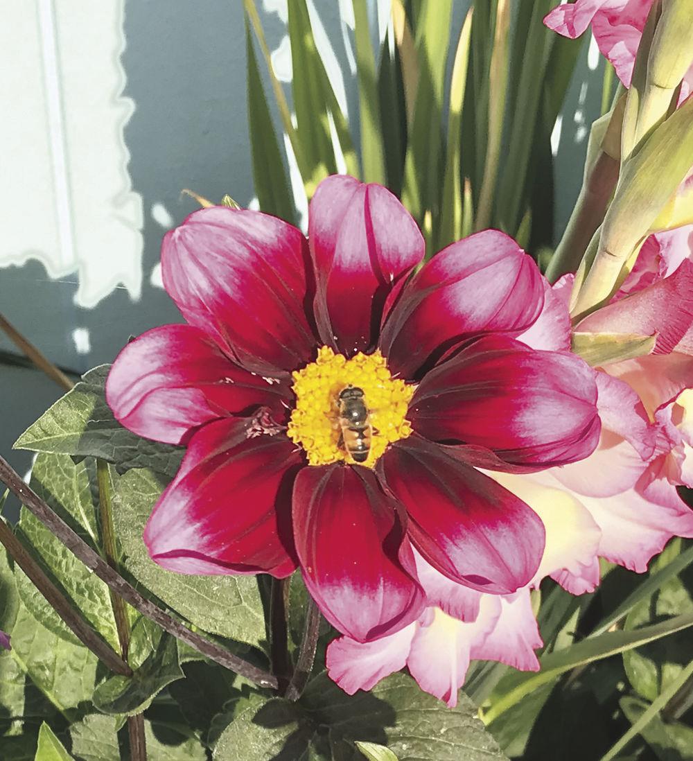 """Bee Bashful."" by Carol Langlois"