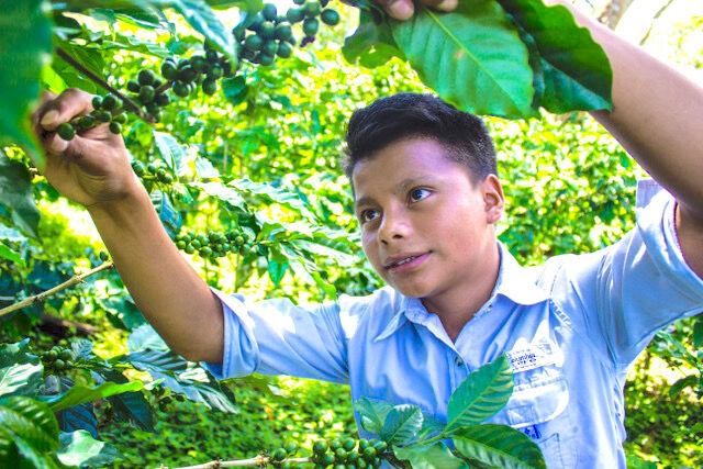 Bruce's Foodland in Fort Payne has begun selling Subida Coffee