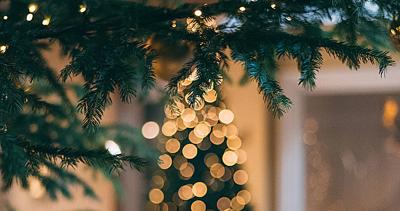 Real Christmas Trees or Artificial Ones?