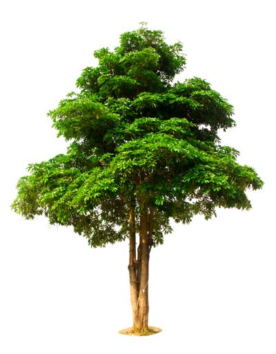 Tree City U.S.A. community