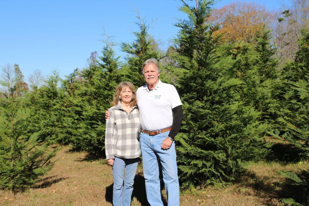 O Christmas tree, o Christmas tree | News | times-journal.com