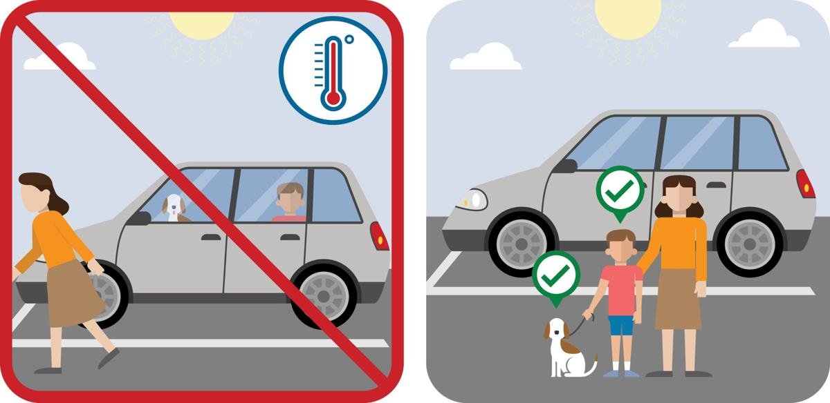 'Look before you lock' your car, prevent heatstrokes