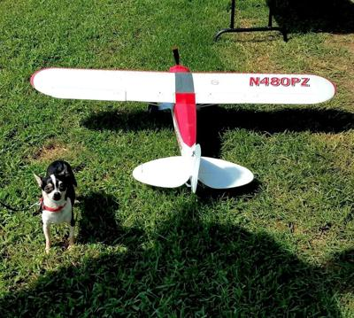 Flying for furry friends