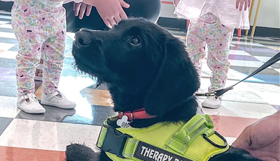 Sheriff's Office welcomes therapy dog