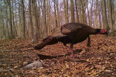 UPDATED: Join us and other turkey hunters at #CTNgobblers