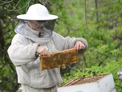 Ben Cooper works with bees