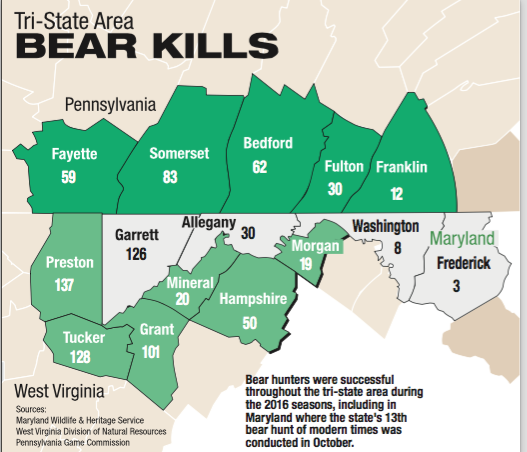 Hundreds of bears harvested in three state region | Local News