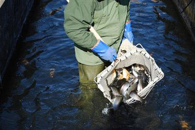 Preseason Trout Stocking: Week of Feb  10 | Outdoors | times