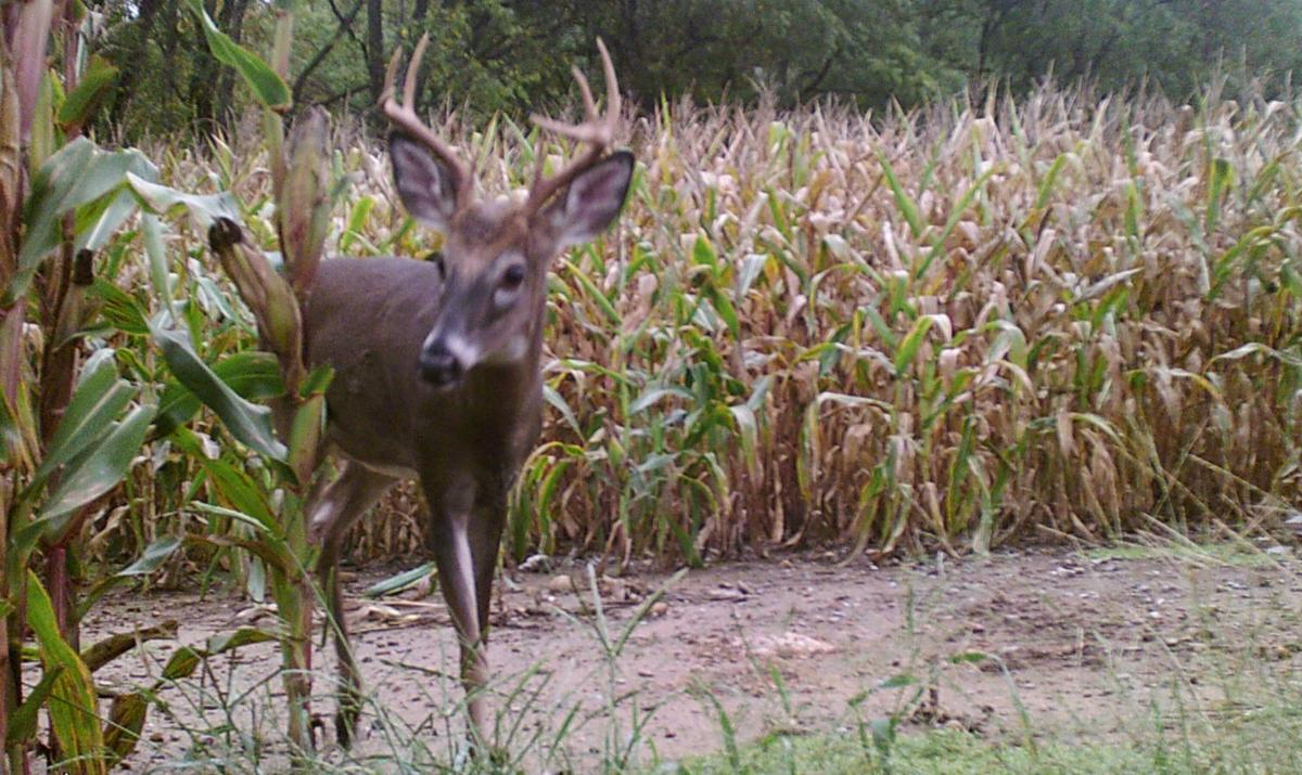 Like farmers, Maryland hunters should be thinking about deer ...