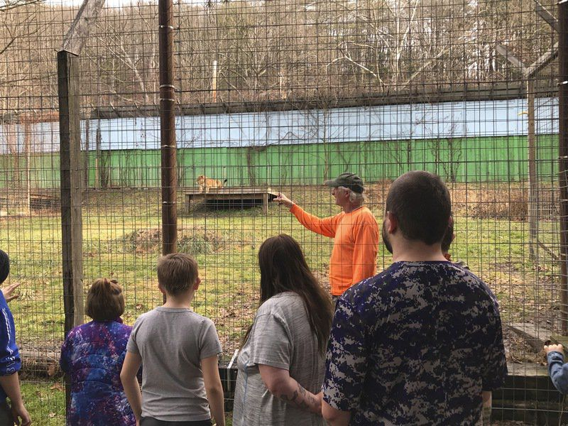 Zoo holds open house to say goodbye to big cats; owner hopeful animals can stay put