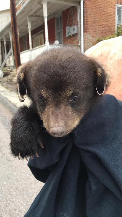 Loncaconing cub 4/4/17