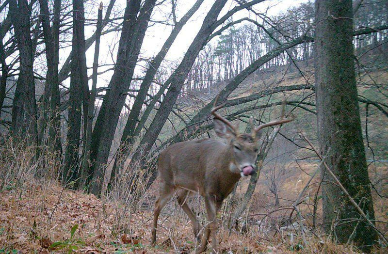 New Maryland hunting regulations being formed