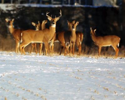 Muzzleloader season for deer reopens Dec. 21