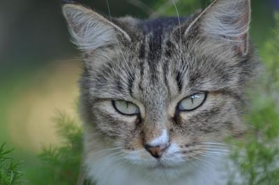 Pennsylvania DEP releases results of 'cat-urine' smell probe