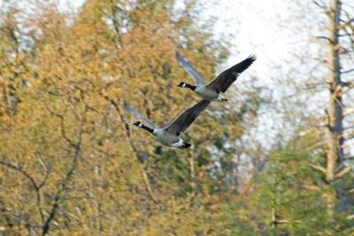 DNR announces bird hunting seasons