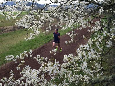 D C Cherry Blossom Peak Predicted For April 11 14 Local News