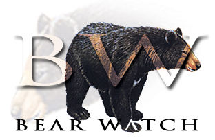 Bear Watch