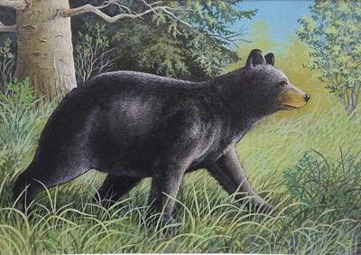 Bear painting by Larry Smail