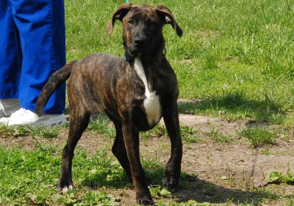 Adopt-A-Pet: 'Orion'