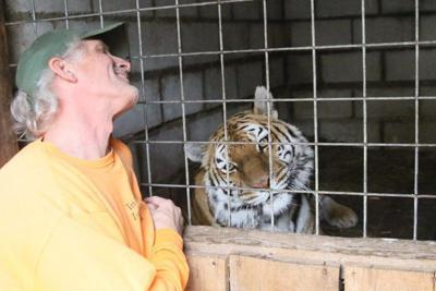 Zoo prepares for big cat removal; protests planned
