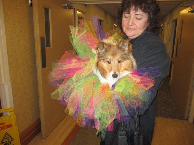 Canine cuties brighten day at Piney Valley
