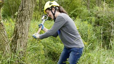 TNC, ACM team to help red spruce