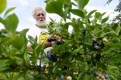 20190810_bta_Blueberries Weekender
