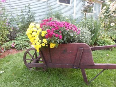gardening magazines submission guidelines