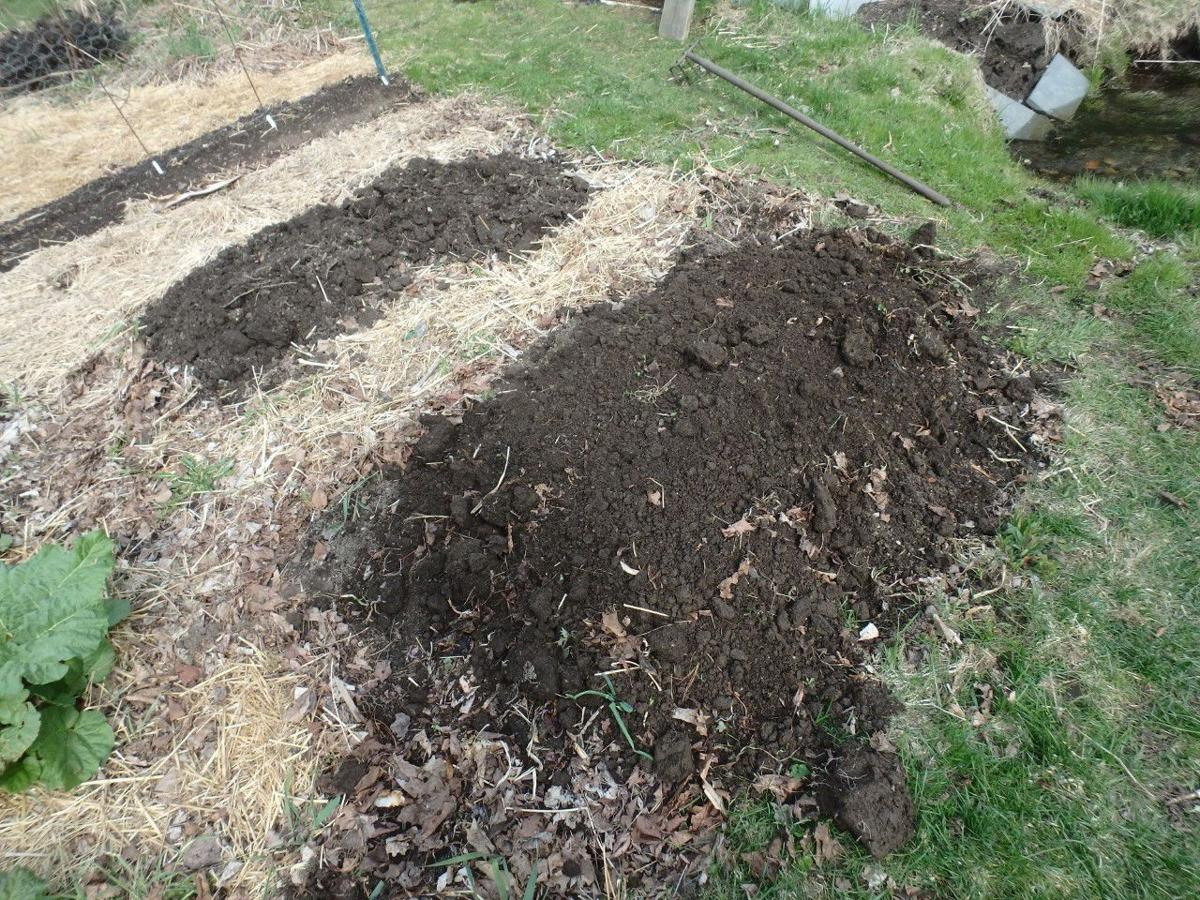 0516 Homeyer MAG_Raised beds warm up quicker than flat beds in spring.jpg