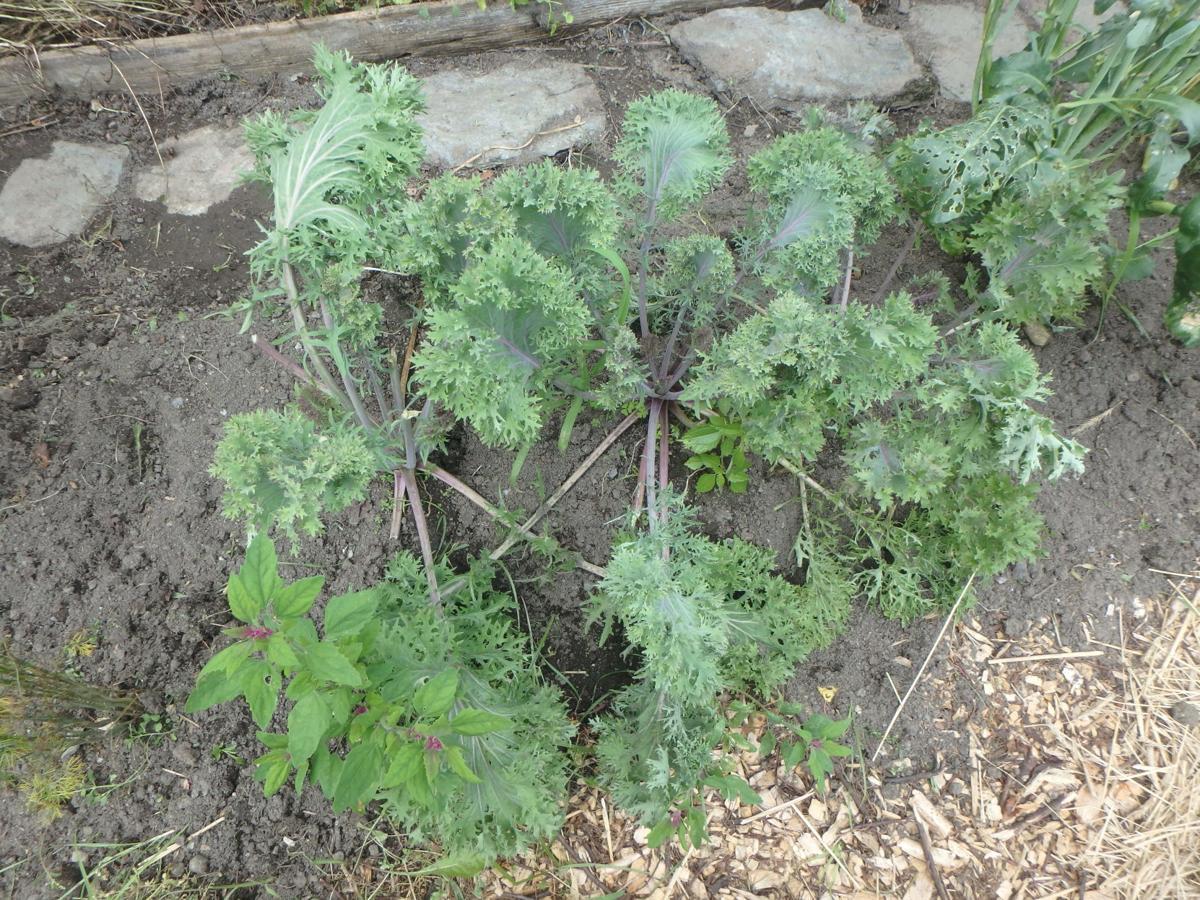 Homeyer: Growing lesser-known veggies