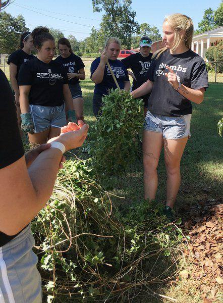 TU's JV softball team helps through yard work